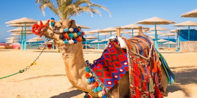 Ägypten: Die schönsten Ausflüge, die ihr nicht verpassen solltet