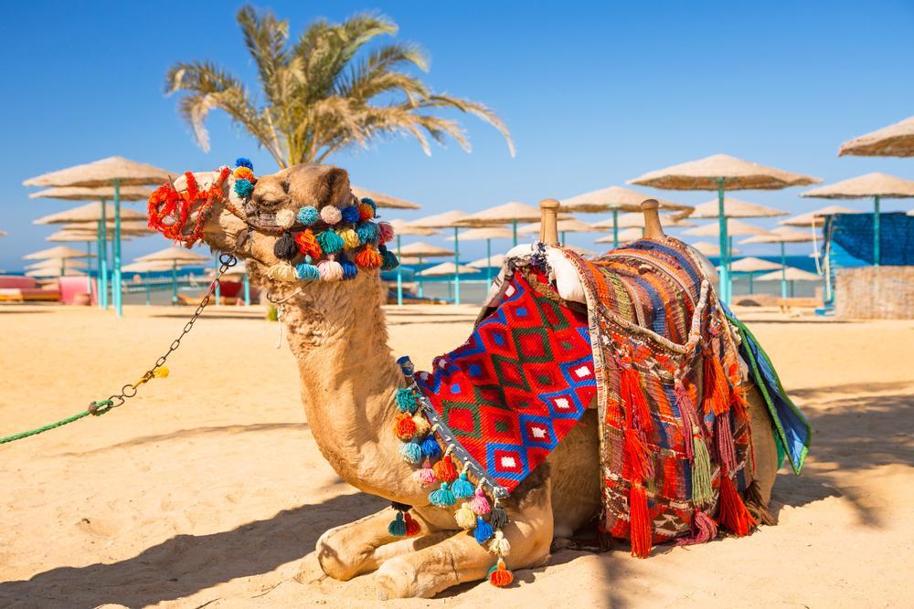 kamel-ägpyten
