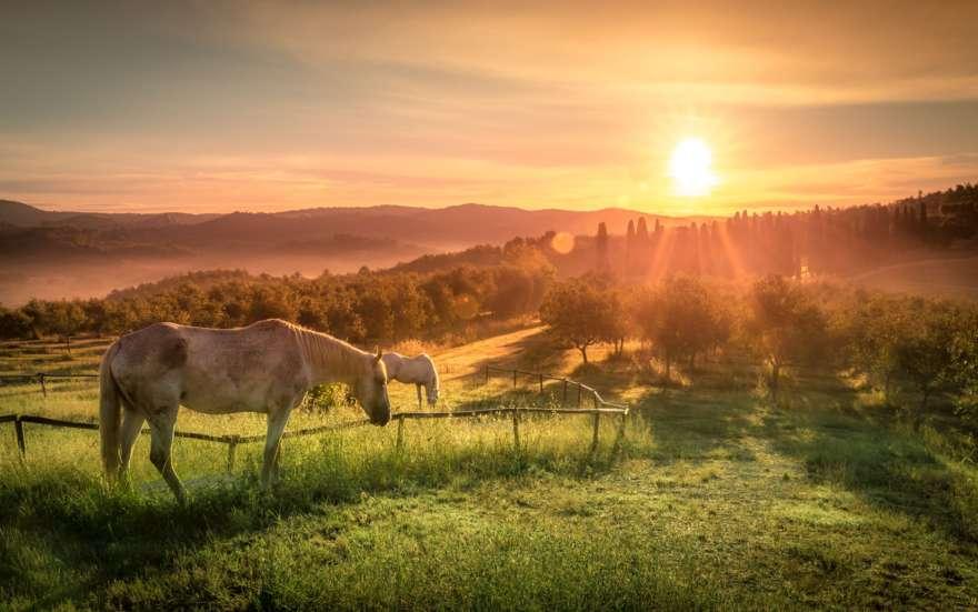 toskana-pferde-bei-sonnenuntergang