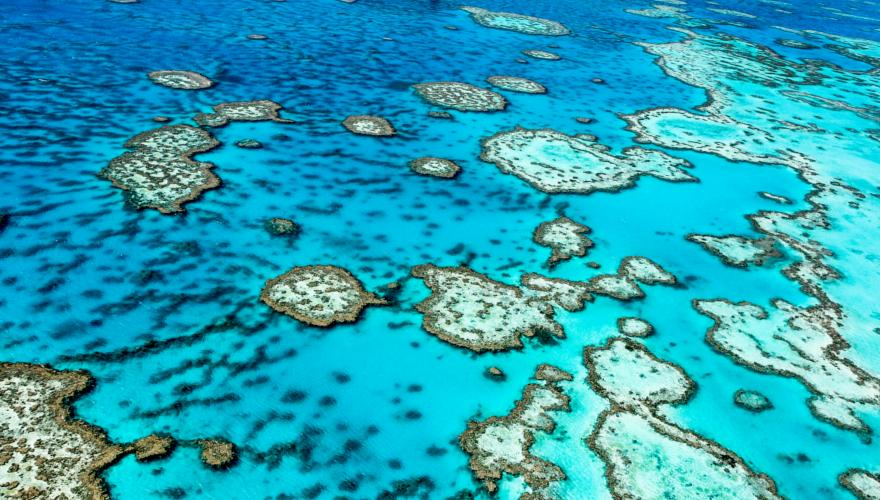 Great Barrier Reef in Australien