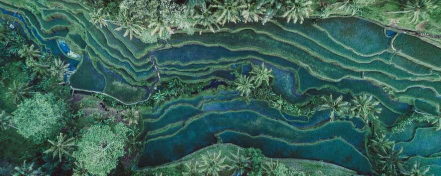 Ubud Bali Reisfelder