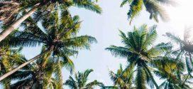 Ab in die Ferne – Bloggerin Janas Tipps für eure erste Fernreise