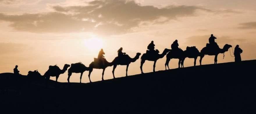 Kamele bei Sonnenuntergang in der Sahara