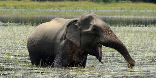 Sri Lanka: Meine Rundreise durch das Inseljuwel im Indischen Ozean