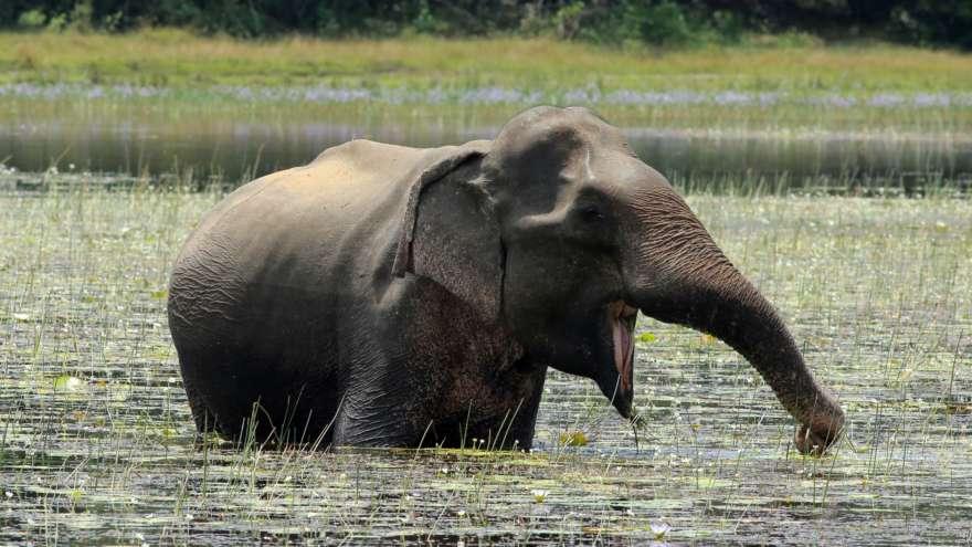 Elefant im Wilpattu Nationalpark in Sri Lanka