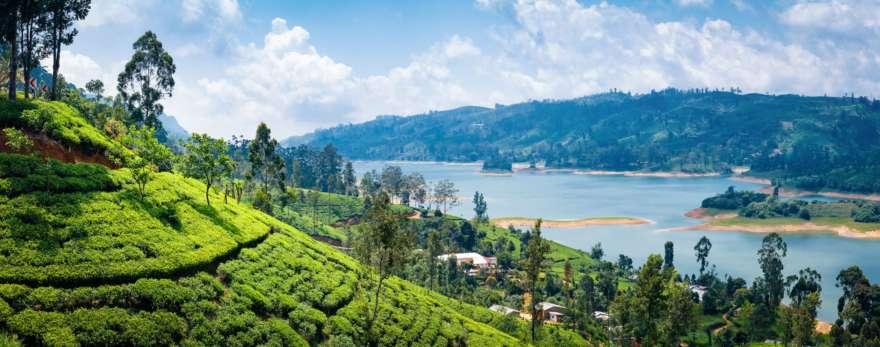 Teeplantage in Nuwara Eliya auf Sri Lanka