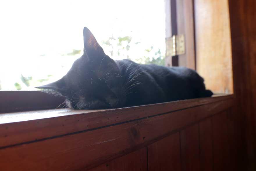 Katze in Topes de Collantes