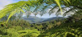 Ein Ausflug nach Topes de Collantes – Wandern, Natur und Kaffeeverkostung