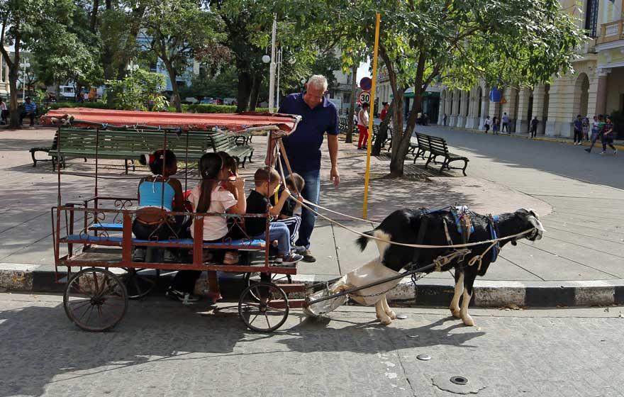 Ziegenwagen in Santa Clara