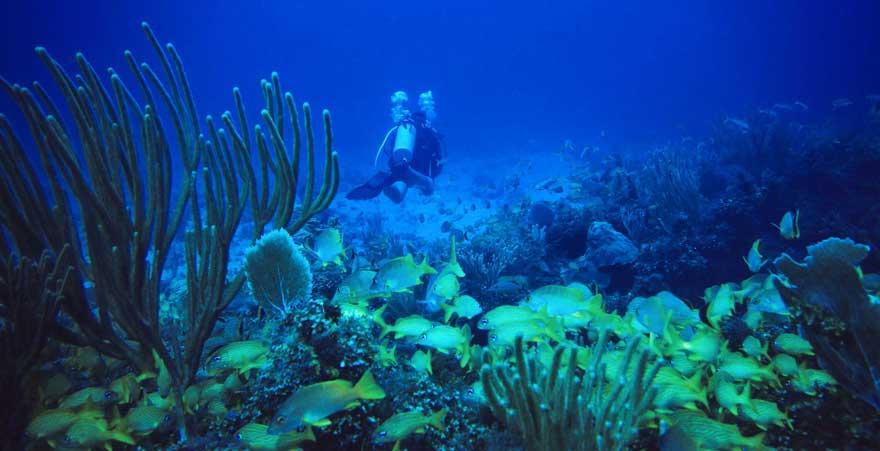 Taucher in der Karibik