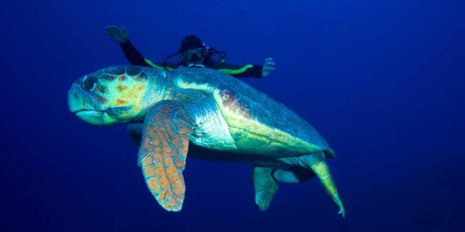 Schnorcheln und Tauchen auf Kuba – Unberührte Korallenriffe warten auf euch!
