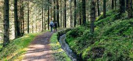Wandern im Harz – Janas Tipps und Favoriten
