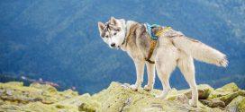 Wandern mit Hund: Der spanische Küstenweg im November