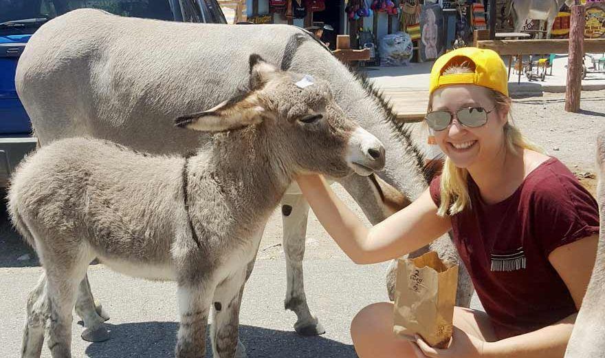 Esel in Oatman