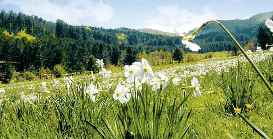Sila Nationalpark in Kalabrien in Italien