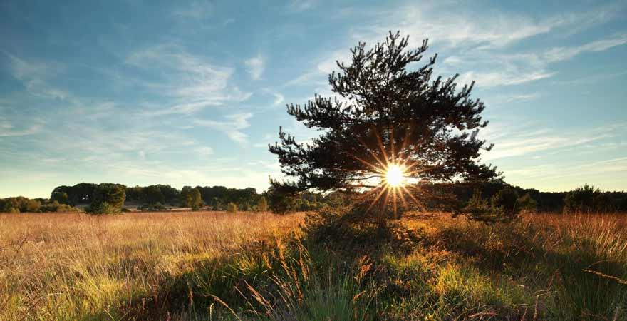 Lueneburger Heide in Deutschland