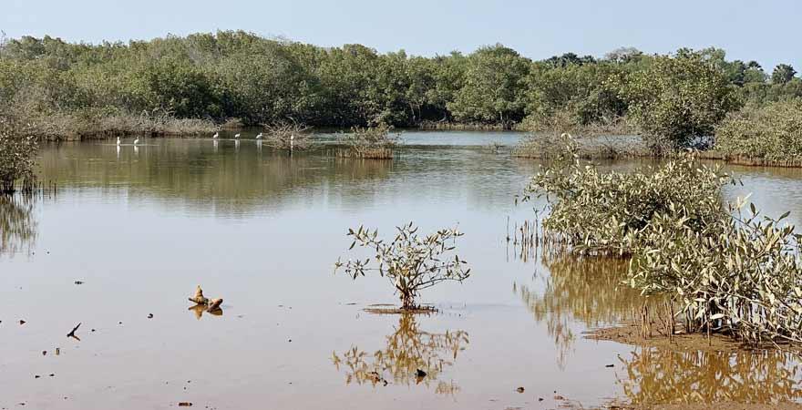 Pelikane auf dem Gambia River