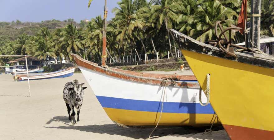 Cow Beach auf Goa in Indien