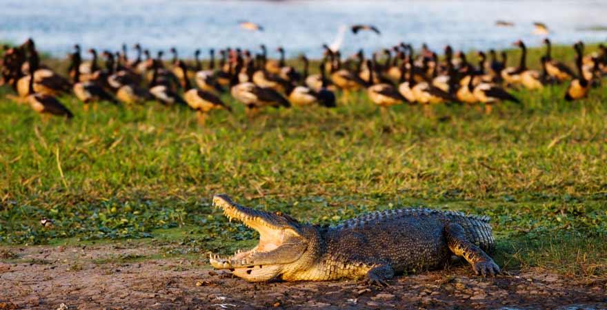 Krokodil im Kakadu Nationalpark in Australien