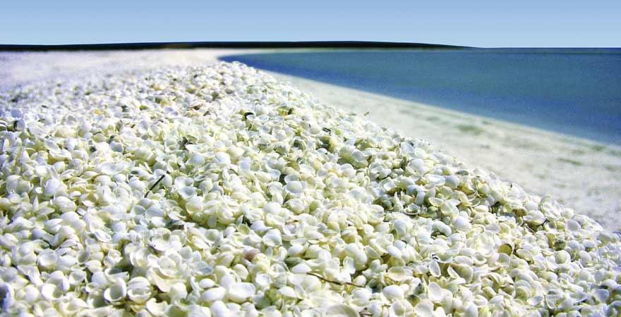Shell Beach in Australien