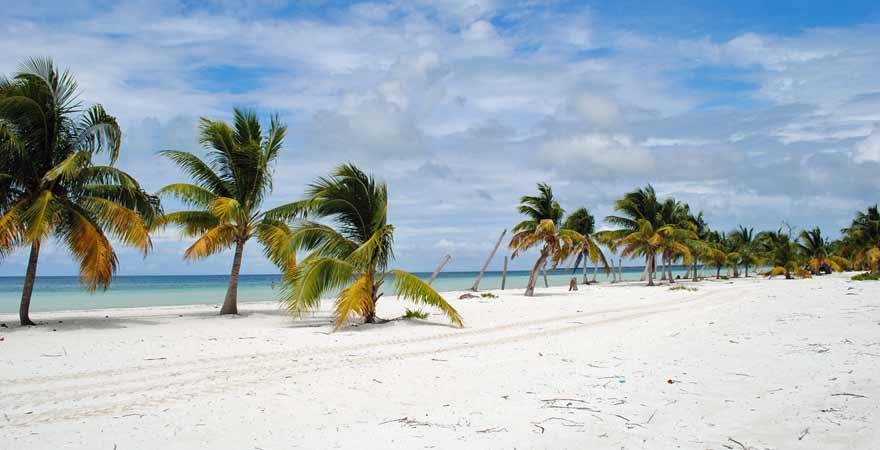 Palmen auf Cayo Blanco in Kuba