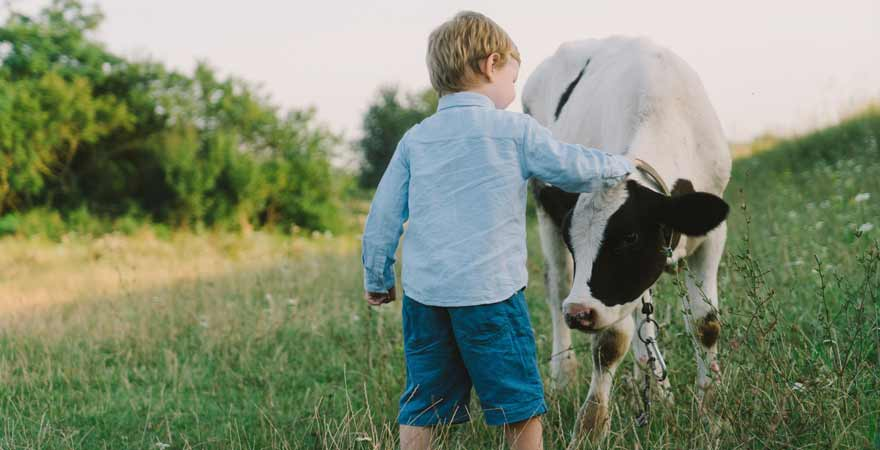 Junge mit Kuh auf dem Bauernhof