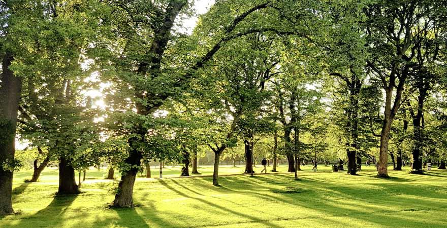 Park mit Bäumen