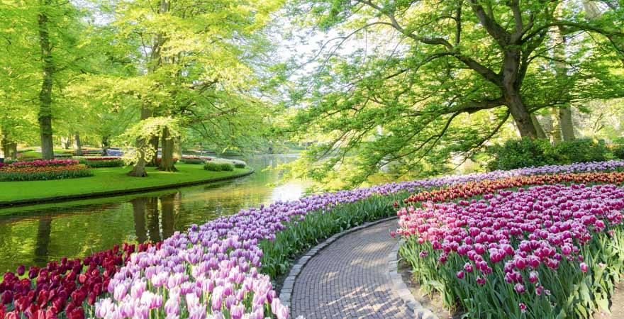 Tulpen in Keukenhof in den Niederlanden