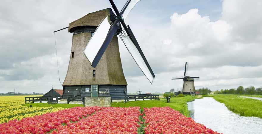 Tulpen und Winmühlen entlang des Slingerpad in den Niederlanden