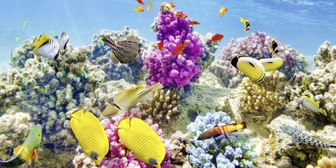 Tauchen auf den Malediven: Die besten Tipps & Hotspots für euren Tauchurlaub im Paradies