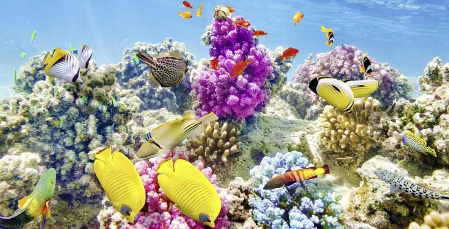 Buntes Korallenriff auf den Malediven