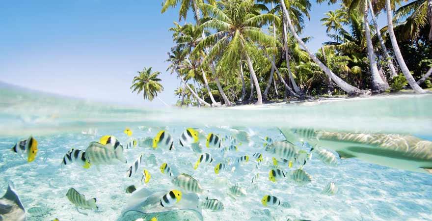 Fische an der Küste der Malediven