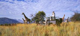14 spektakuläre Orte für eine Safari