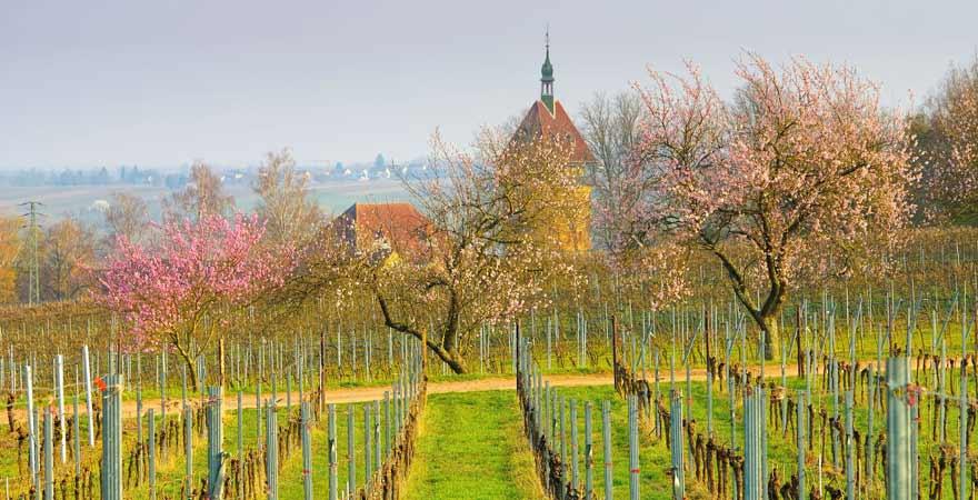 Geilweilerhof an der deutschen Weinstraße in der Pfalz