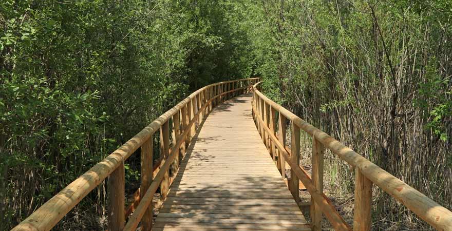 Holzbrücke im Müritz Nationalpark