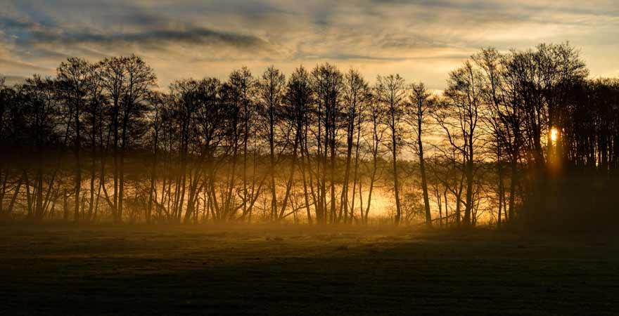 Sonnenaufgang am Müritz Nationalpark Wanderweg