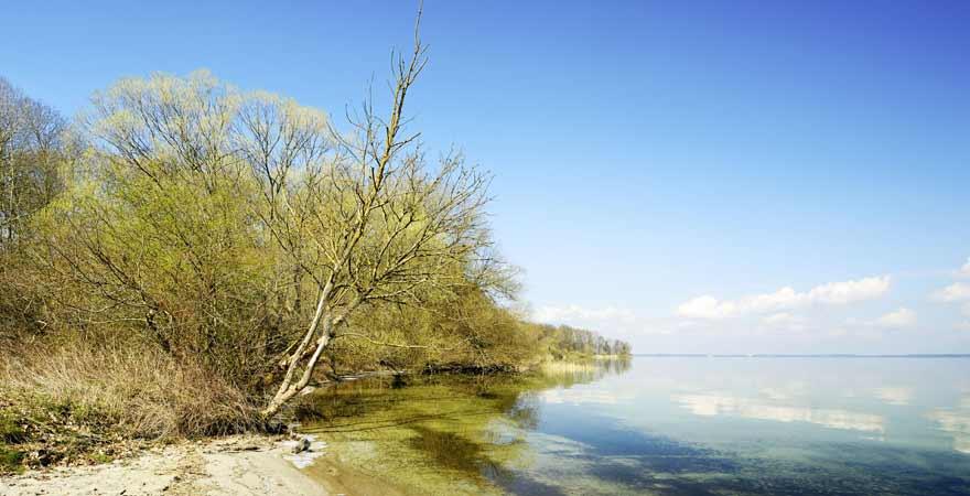 Ufer eines Sees im Müritz Nationalpark