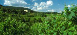 Die Deutsche Weinstraße – Zwischen Trauben, Kultur und Festen