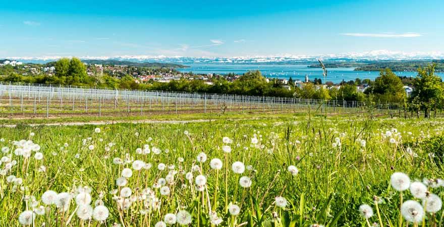 Bodensee im Frühling