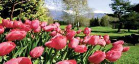 Vielseitig und einmalig schön: Tipps für euren Frühlingsurlaub in Bayern