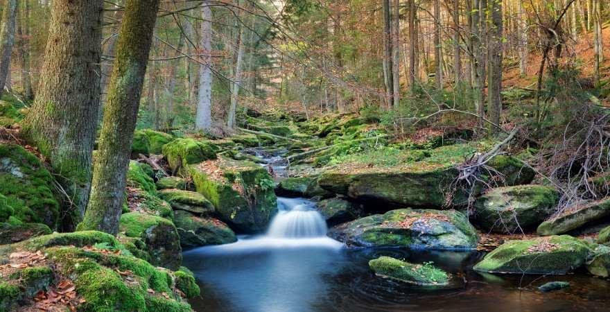 Wildbach mit kleinem wasserfall