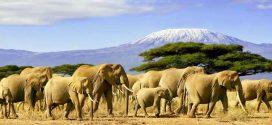 Weite Savannen und wilde Tiere: Unsere Tipps für eine Safari in Kenia