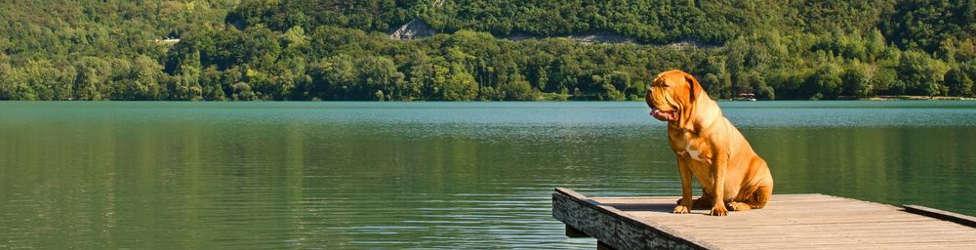 Urlaub Mit Hund Am Bodensee Jetzt Bei 5vorflug Buchen