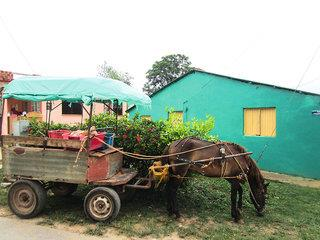 Radtour durch Kubas grünen Westen - Kleingruppenreise