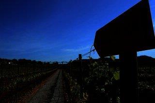 Sa Vinya des Convent Agroturismo