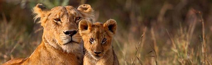 Rundreisen und Safaris