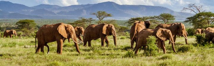 Urlaubsziele in Afrika