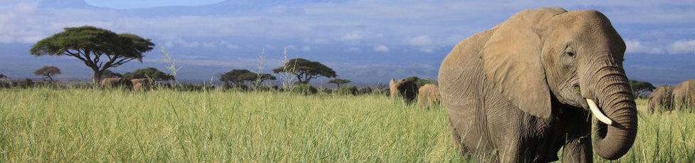 Urlaub in Kenia