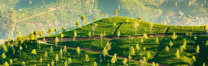 Sri Lanka Urlaub mit Bestpreisgarantie