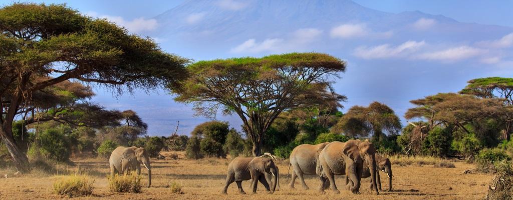 Fernreise Kenia